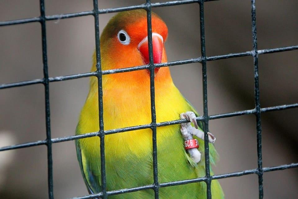cages-pour-oiseaux