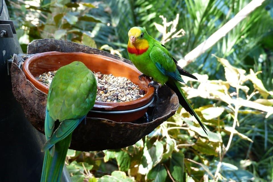 nourriture-et-gateries-pour-oiseaux